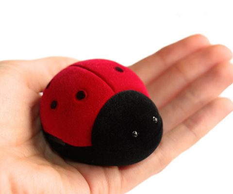ladybird-box