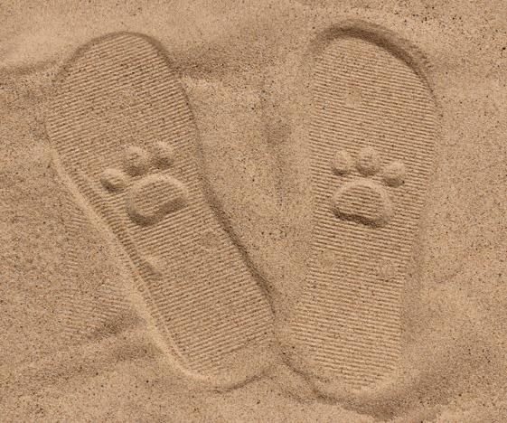 Paw Print Sand Imprint